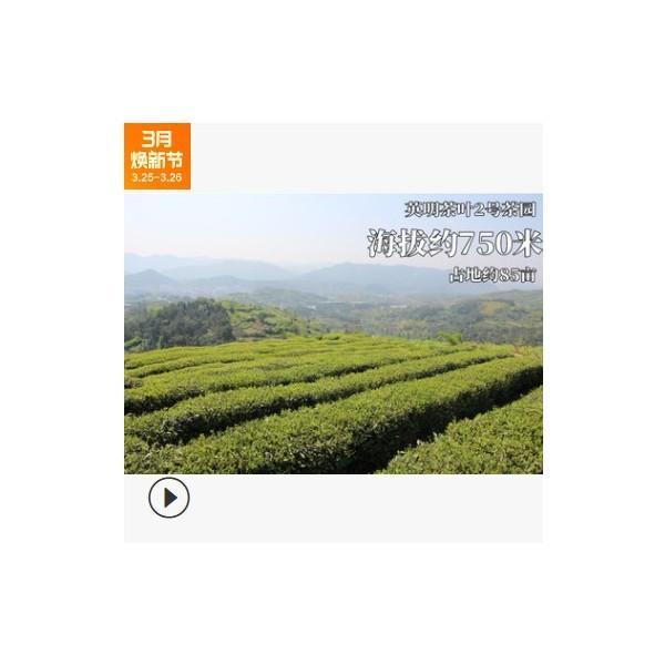 新茶 礼品 大佛龙井茶 英明 木 半斤
